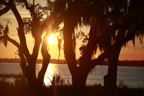 fycharleston:  The Golden HourKiawah Island, SC