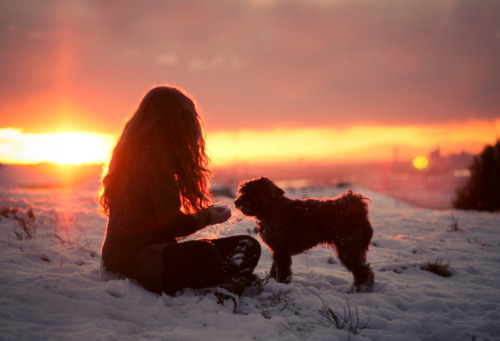 sunset with a dog <3
