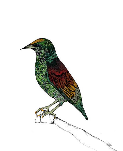 bird drawing on Tumblr
