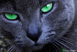 Green eye II by Sizzo-grafy on Flickr.