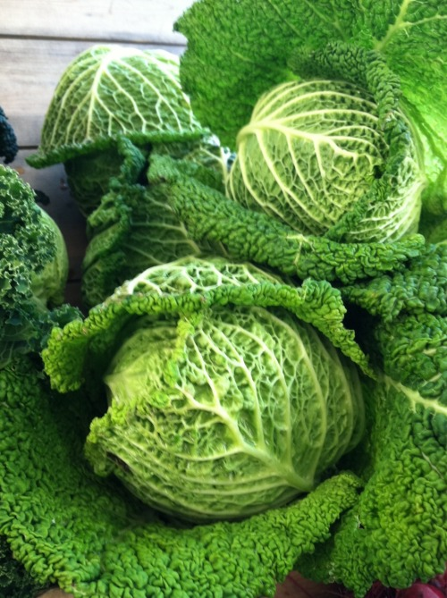 thereluctantrawfoodist:  I love cabbage now! fortunatechefs:  Savoy Cabbage at the Copley Farmer's Market   That looks so delicious!