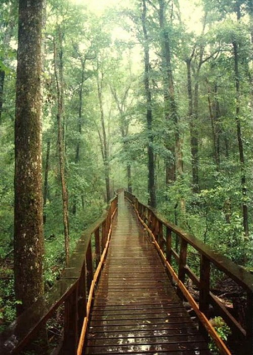 fuckyeahunitedstates:  Congaree Swamp National Park, South Carolina