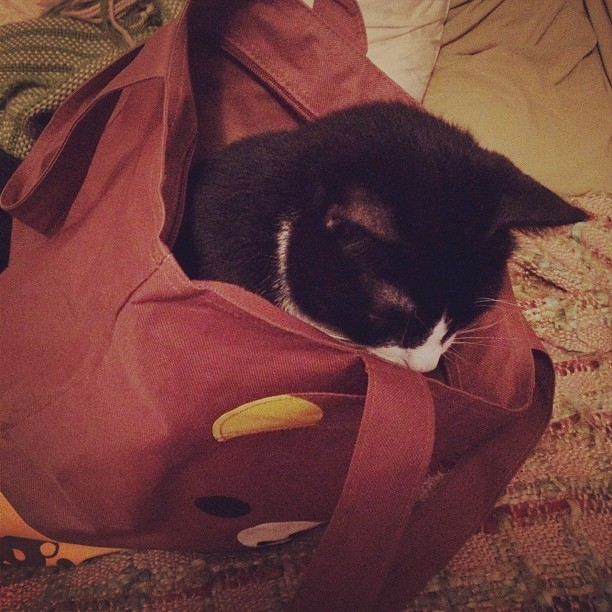 otto #cute #cat in a bag (Taken with instagram)