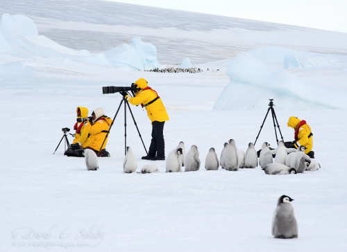 "akane-kw:  amnemonic:  500px / Photo ""Photo Workshop…polar style"" by David C. Schultz 遊んで欲しい幼稚園児かー。  ぺんぎん最強にかわいい"