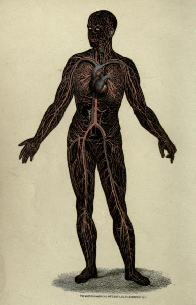 Arteries and veins of the adult body. Wonders of the Human Body. A. Le Pileur, 1871.