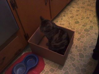 get out of there cat. you cannot be in that box. i know that i need to fill you food bowl but is this some sort of protest until i do? i am confused cat.
