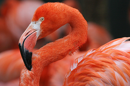 Wet Flamingo .. (by JOSEFQ8)