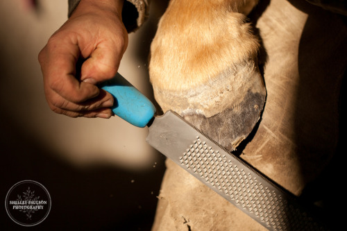 Day 322 - Rasping the Hoof