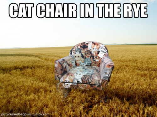 Dear Cat Armchair Visual Pun, Watch out!  I see the hexes of a million jealous meme-creators on the horyezon! From your friend, Zoe