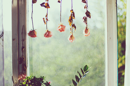 #roses #flowers #floral #window #spring #summer #rustic