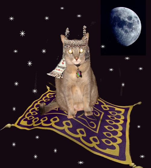 I got jiggy with Photoshop and took my cat Melia on a magic carpet ride!