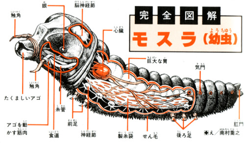 skunkasaurus:  mothra larvae diagram