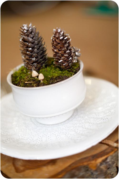 Make a Winter terrarium.