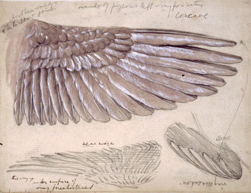 Edward Burne Jones, Drawing of Wings, n.d. (via)