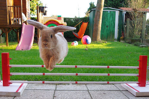robot-heart:  Super bunny jump ! (by r2-detoo)