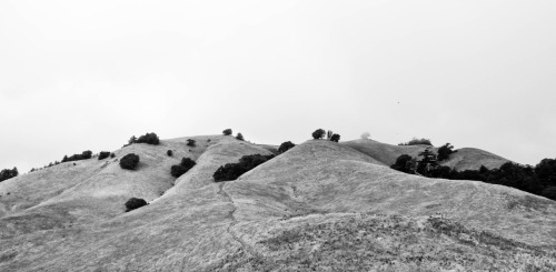 mount tamalpais: matt davis trail. mill valley, california, usa. 2011.
