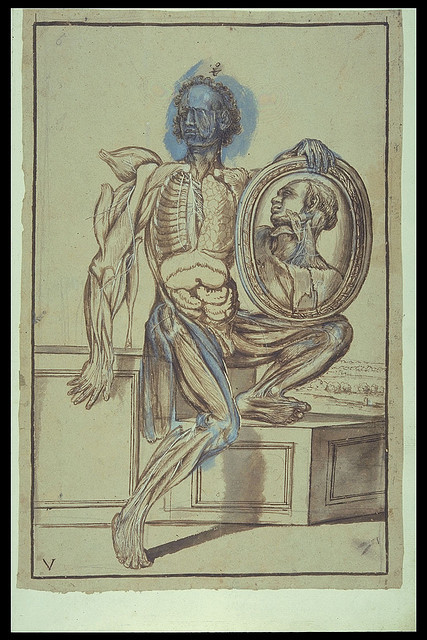 "Pietro da Cortona Anatomical drawings Rome: c.1618 MS Hunter 653 (Dl.1.29) by University of Glasgow Library on Flickr. ""This album of twenty anatomical drawings was intended to be used practically by the medical profession. Its vividly posed figures depicted within landscapes adorned with classical ruins are by Pietro Berrettini da Cortona (1596-1669), one of the most prominent artists of the Roman High Baroque. In the plate shown here, the thorax and abdomen have been opened up and the legs and arms dissected. The figure holds up a mirror - a favourite device in Baroque art - displaying his anatomised head in larger detail. The drawings are finished in brown ink and black chalk, washed with blue, sepia and grey; the nerves are highlighted with white paint. They were prepared from dissections made at the Santo Spirito Hospital in Rome in about 1618."""