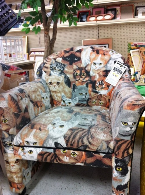 Katzensessel / Cat Chair