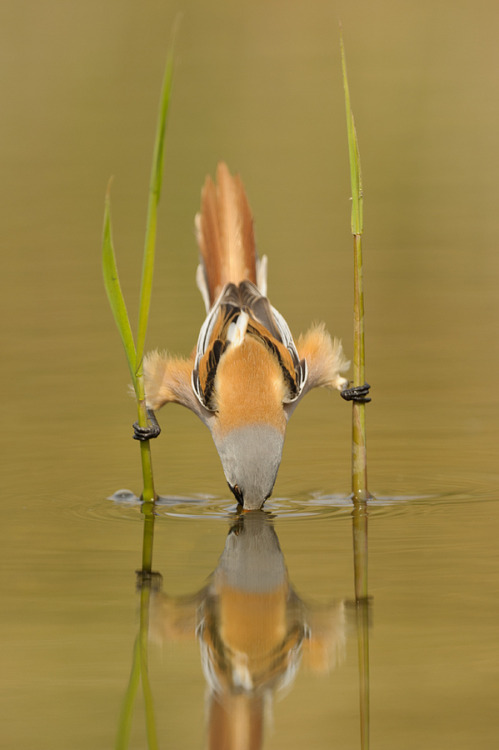 "magicalnaturetour:   ""Show off…."" by Edwin Kats :)"