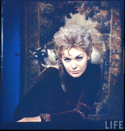 Kim Novak, by Eliot Elisofon. Source: LIFE Photo Archive, hosted by Google.