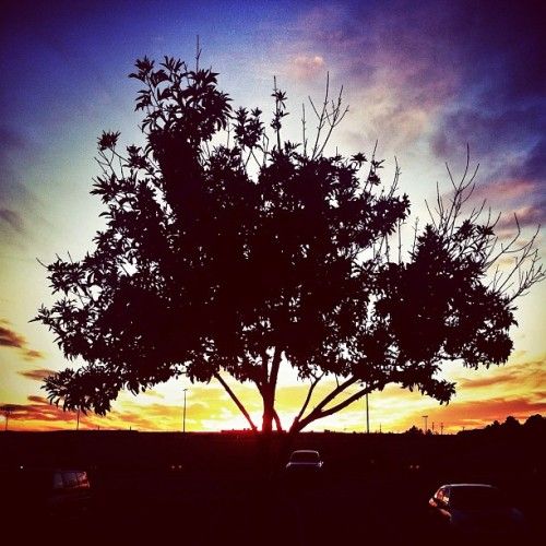 #Autumn #Sunset #Silhouette #Tree #Sky #SkyPorn #mobilephotography #iphoneography #Arboreal #Lomora2  (Taken with instagram)