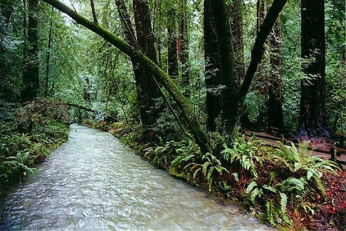 just-breezy:  Muir Woods