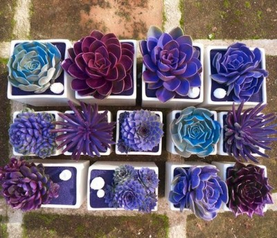 theweddingtree:  Jewel-toned succulents - great idea for a wedding favor.