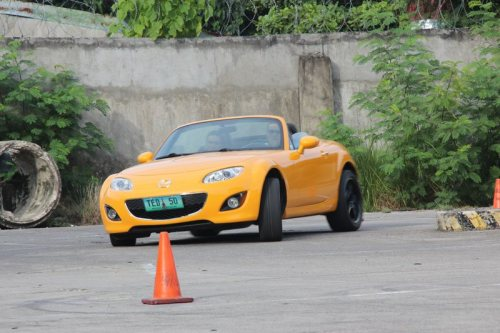 Sunbeam Yellow NC2 enjoying some cones.