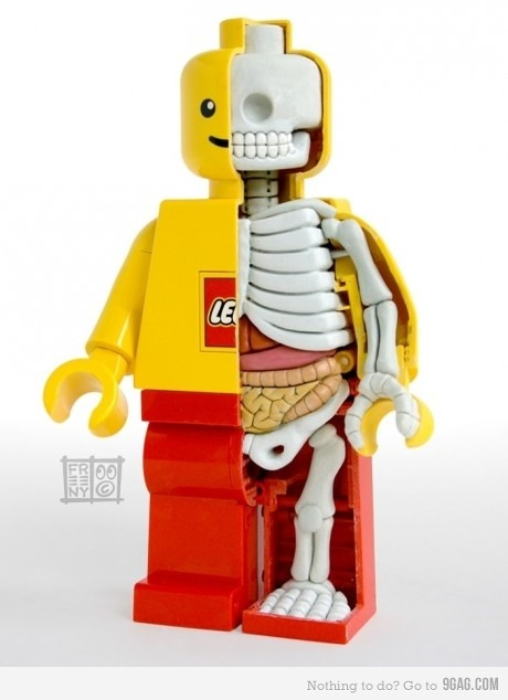 ha! surviving-science:  lego anatomy