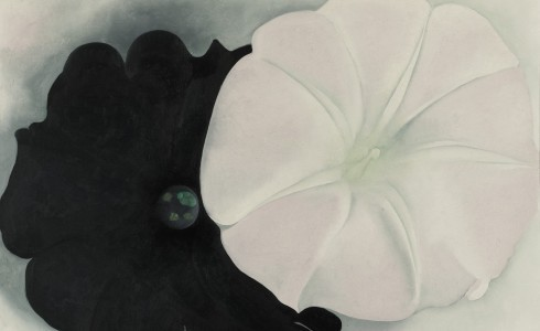 "Once again… Georgia O'Keeffe ""Black Petunia and White Morning Glory I"" link"