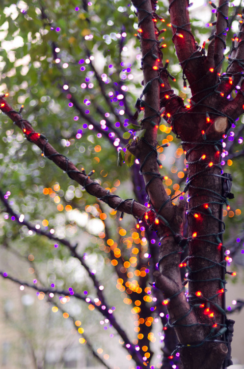emmyc:  joelzimmer:  Purple and Orange  My favorite part of winter is the lights