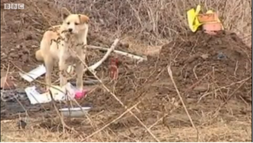 China dog refuses to leave dead owner's graveside      Oh, good grief.