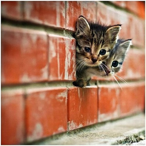 get out of there cats. you are not pink floyd. you are not bricks in the wall you are cats.