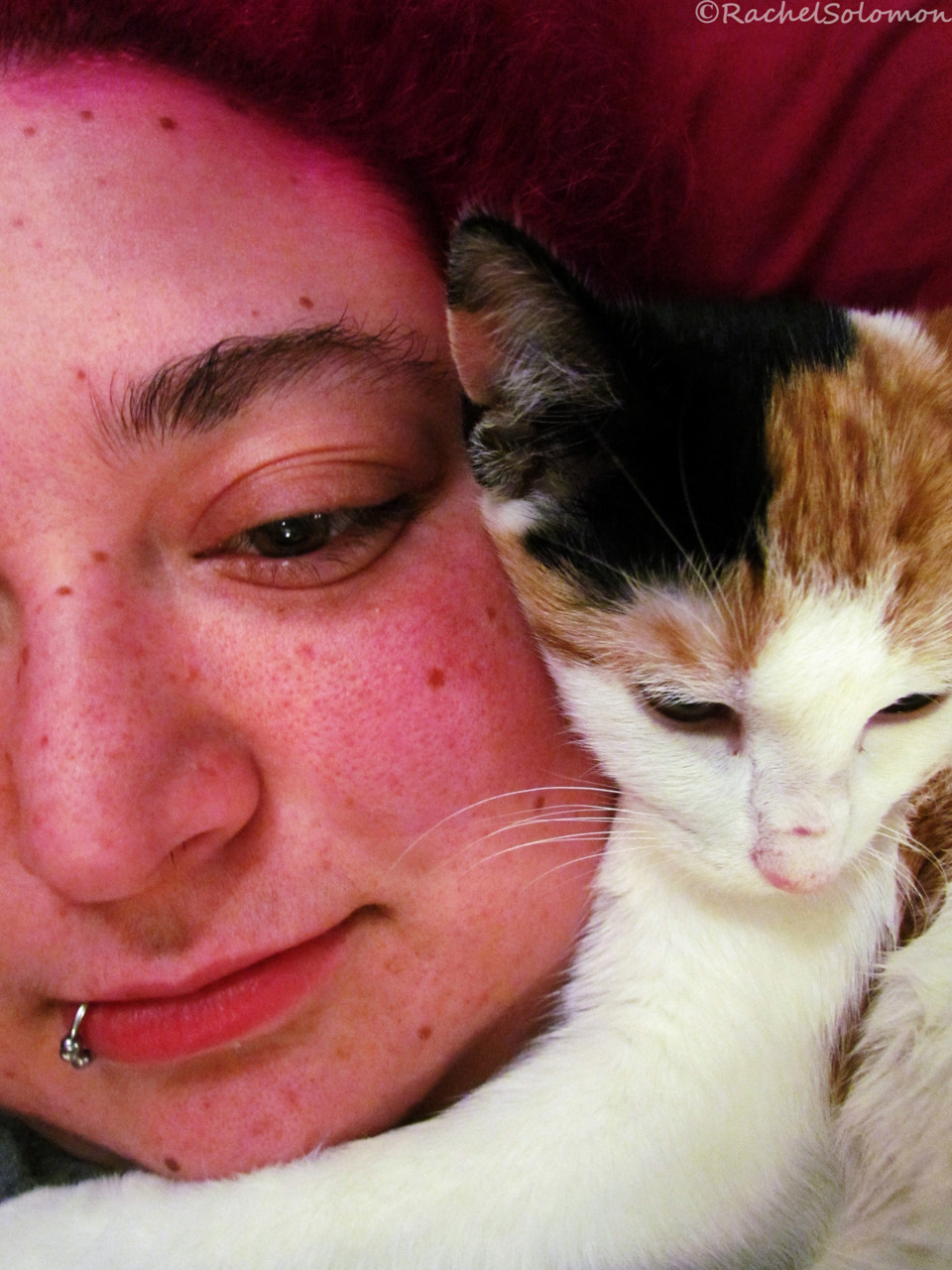 nevermindthecamera:  Christie, in a rare, calm, sweet mood, hugging my face while I relaxed on the couch.