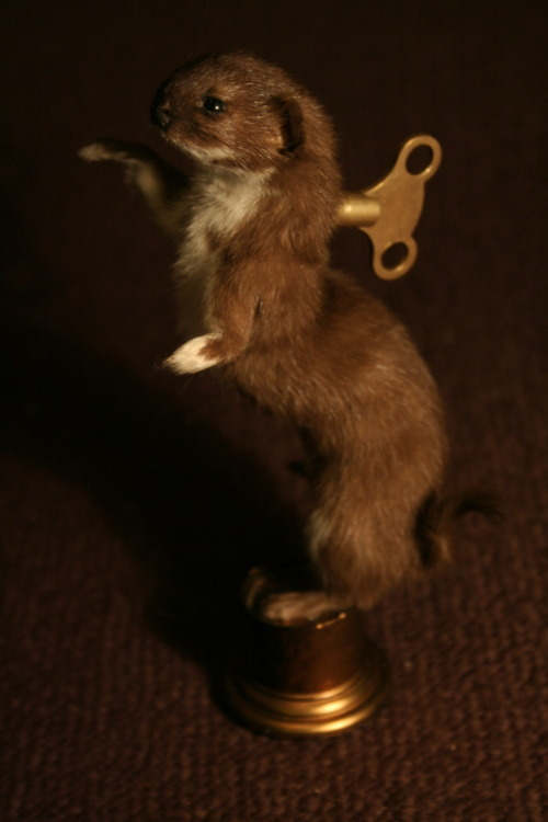 Taxidermy 'Clockwork' Stoat - Ebay Auction