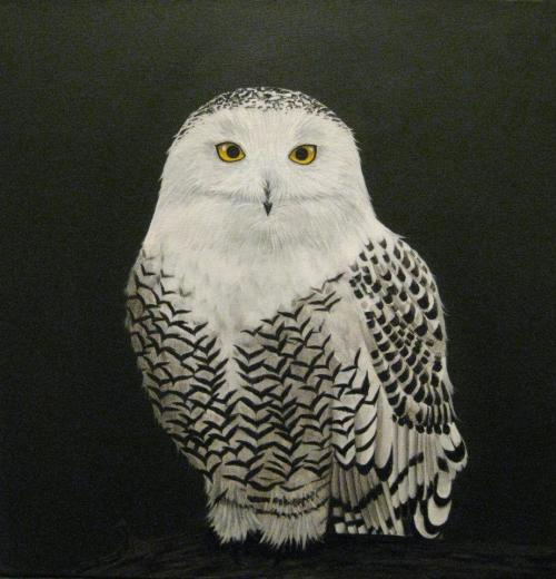 """Snowy Owl"" 16""x16"" Acrylic on canvas SOLD"