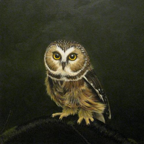 """Saw-whet Owl"" 16""x16"" Acrylic on canvas SOLD"