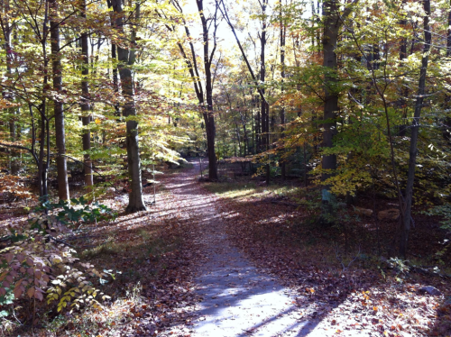 Fall foliage in its sun-lit beauty: Long Branch Stream Valley Trail, November 13, 2011.