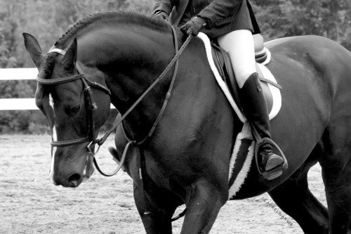 mmmm equitation me up<3
