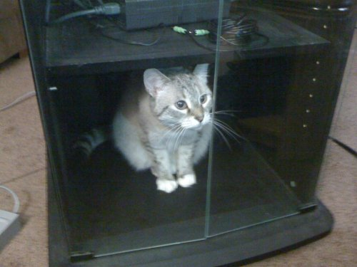 oh cat. you should have know not to go in that cabinet. now you are stuck. how do you think you are going to get out of this one cat.