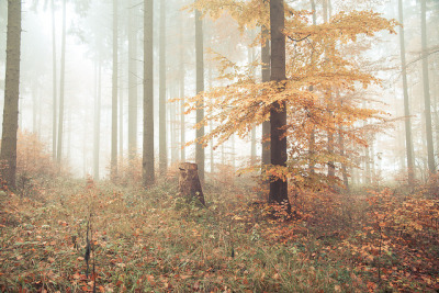 annaharo:  foggy forest party 1 by photo-se.com on Flickr.