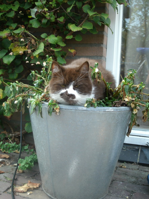 get out of there cat. you are not a plant. you do not have roots that grow in the dirt. stop pretending cat.
