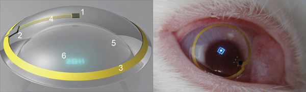 jtotheizzoe:  Electronic contact lens displays pixels on the eyes … if you're a rabbit. Eye-integrated heads-up displays may not be a Skynet fantasy after all! Recently, progress was reported in using a contact lens to project a one-pixel image onto the retina of the rabbit wearing it. First of all, rabbits apparently wear contact lenses! Secondly, this isn't exactly HDTV, but it shows that images can be safely projected from a safe eye implant. I think this is the obvious next step:  (via One Per Cent, h/t to TNW)