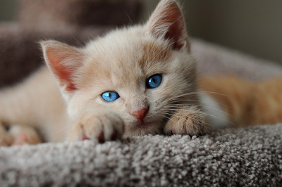 cutest-cats:    love cute cats? follow http://cutest-cats.tumblr.com/