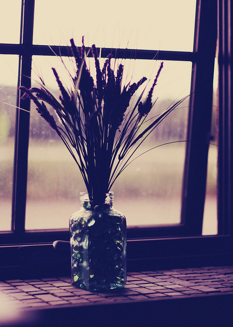 Lavender in the Window by jilleatsapples on Flickr.