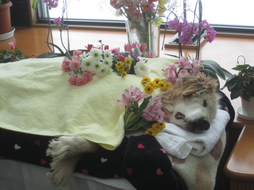 venusinhugs:  deformutilations:  Dog funeral  WELL IM SAD NOW  rip