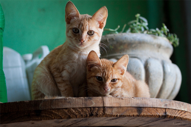 we love cats by Lázarobown on Flickr.