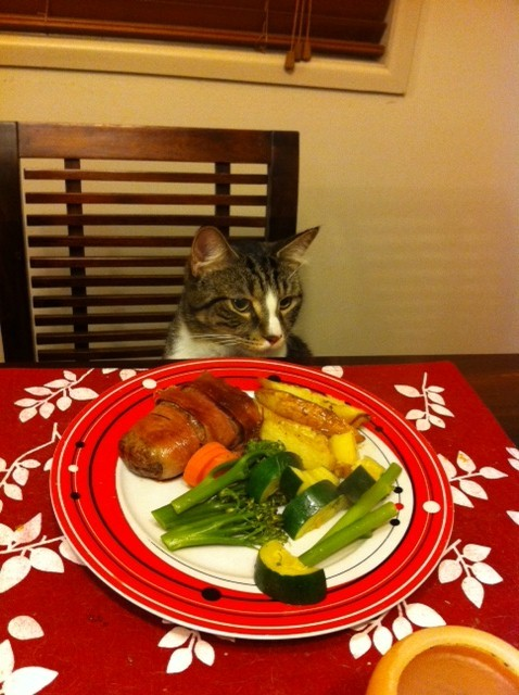 getoutoftherecat:  get away from there cat. that plate is not for you. you don't eat at the table. you are not a person.  that pot roast is not yours cat. do not rub it all over your chest. you are not an excitable boy you are a cat.