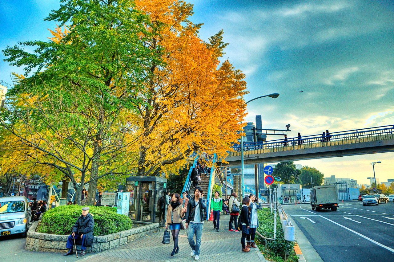 Pretty fall colors in the big tree across from Harajuku Station in Tokyo.