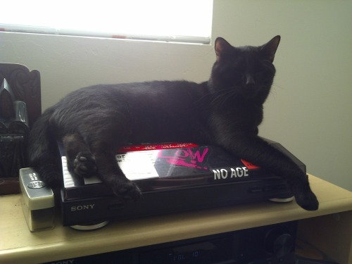 get off of that record player cat. you don't even know what a record is. and i don't imagine that you would enjoy spinning around. you might get dizzy cat.